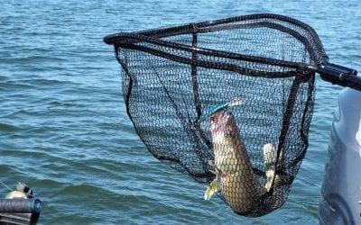 Best Fishing Net of 2018 – Landing Net Review