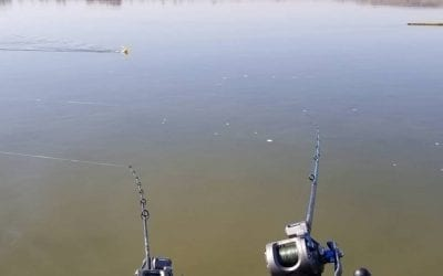 Walleye Trolling Report – Pre-Spawn Walleyes Shallow