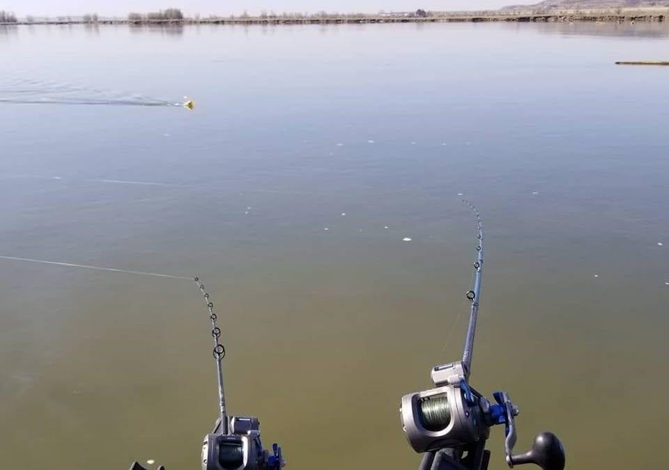 Walleye Trolling Report – Pre-Spawn Walleyes Shallow