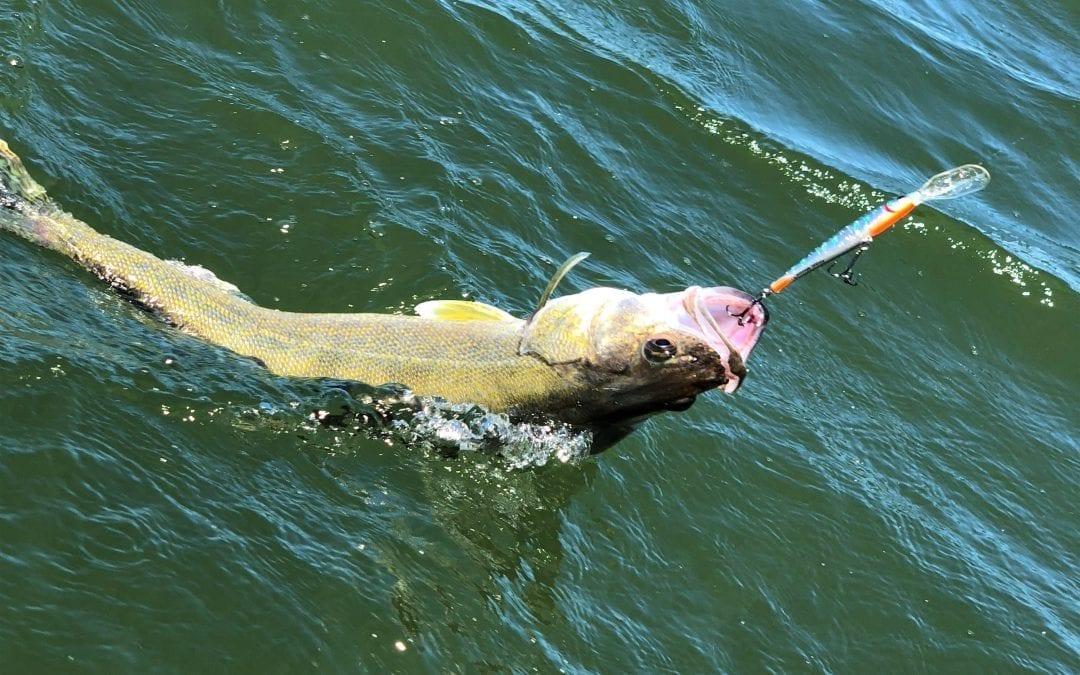Berkley Flicker Minnow #11 Deep Diver Review for Walleyes