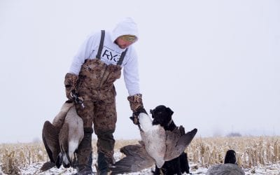 Canada Goose Hunting Tips – How to Hunt Geese