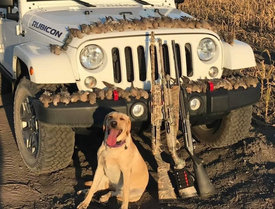 Best Dove Hunting Gear